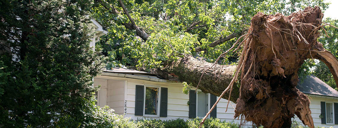 Tree on a damaged home representing a scene a claims adjuster would evaluate